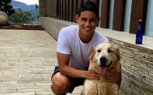 Los tres perros que hacen mejor la vida de James,…