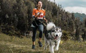 El 'mushing' en Colombia: la pasión de hacer deporte con perros