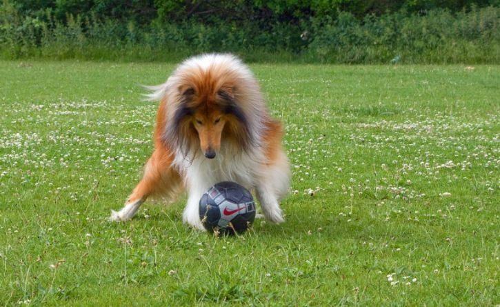 El perro futbolista que sorprendió con sus habilidades en partido profesional de Turquía