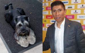 Nairo Quintana encontró a su fiel perro que estaba perdido,…