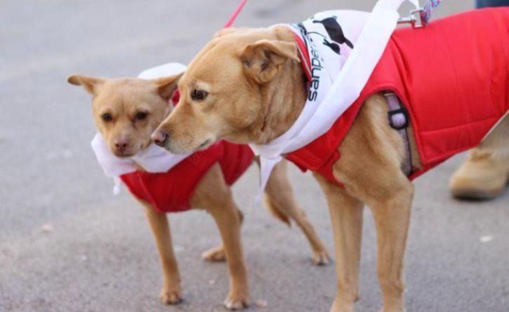 Perros corren en una carrera atlética para protestar contra el maltrato animal