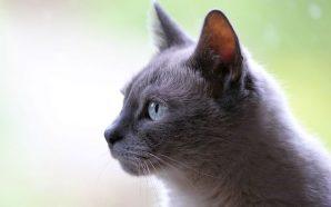 La historia de la gata visita a diario la tumba de su dueño ¡Conmovedor!