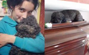 Perro emocionado al visitar el féretro de su dueña muerta hace 4 años ¡Conmovedor!