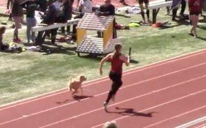 Un perro humilló a unas atletas con su velocidad y…