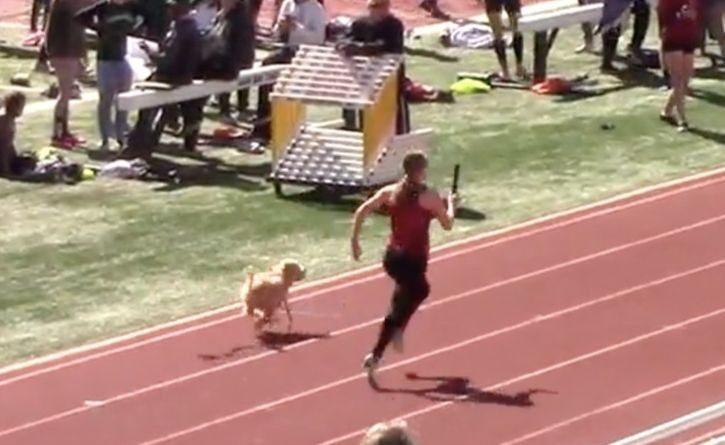 Un perro humilló a unas atletas con su velocidad y les ganó una carrera