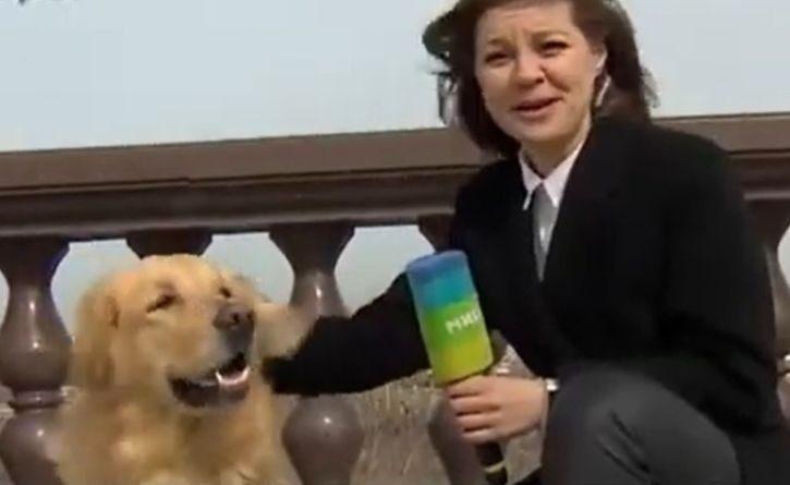 Un perro le robó el micrófono a una periodista en plena transmisión